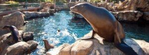 Tierattraktionen im SeaWorld Orlando