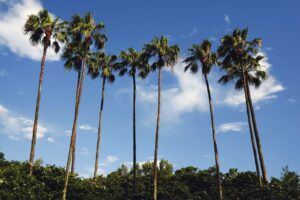 Schönes Wetter in Orlando (Florida)