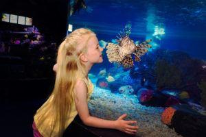 Sea Life Orlando für die Familie