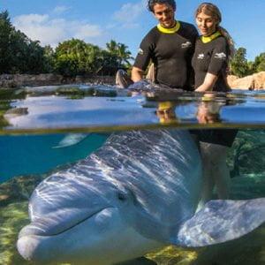 Delfin Discovery Cove Orlando