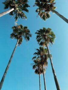 Sommer und Sonne in Orlando