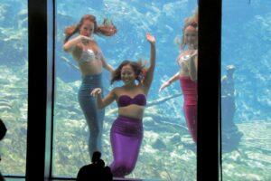 Weeki Wachee Springs Meerjungfraue-Show in Florida